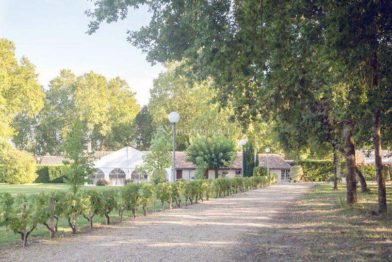 Allée des Vignes