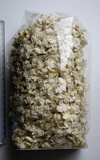 Confettis naturels (white)