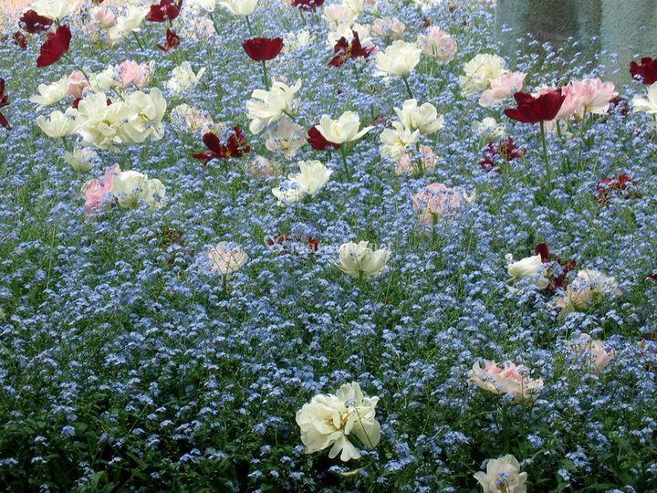 Des fleurs, encore des fleurs