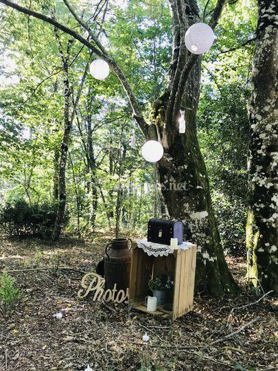 Le coin photo dans la forêt