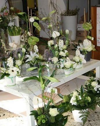 Variété de fleurs