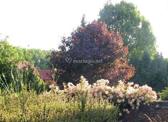 Château de Flesselles - les roses