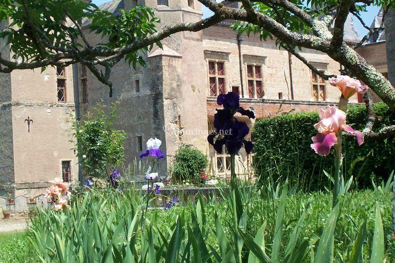 Iris devant le château