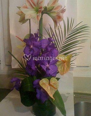 amaryllis fleurs. Black Bedroom Furniture Sets. Home Design Ideas