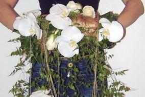 Amaryllis Fleurs