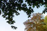 Jardin Orangerie du Ch�teau sur L'Orangerie du Ch�teau