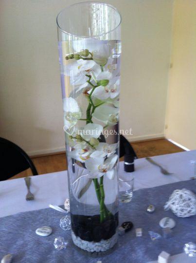 Orchidée dans vase cylindrique