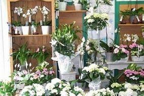 Les Halles aux Fleurs