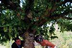 Emilie et Cyrille, nature
