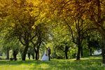 Tableau forêt couple amoureux