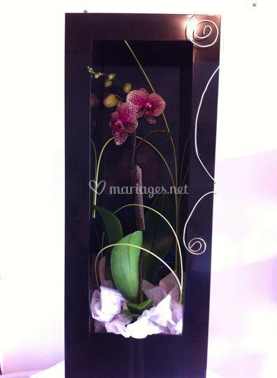 Mur végétal d'orchidée