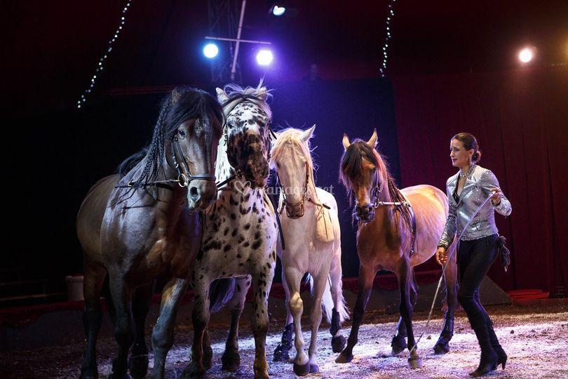 Numéro de cirque avec chevaux