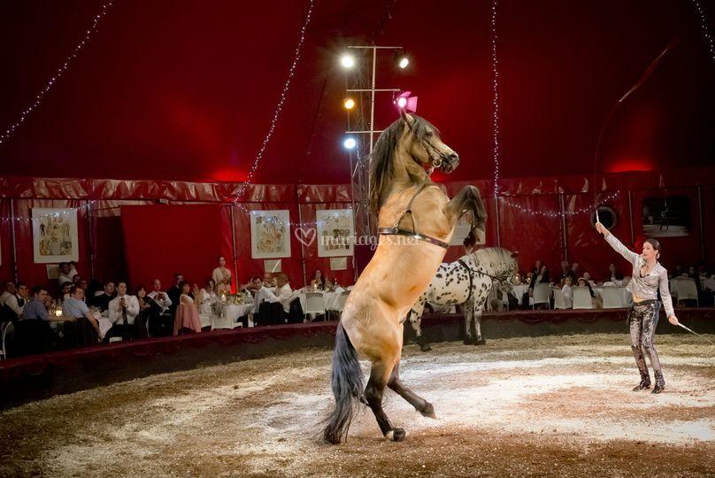 Numéro chevaux sur Chapiteaux de Provence