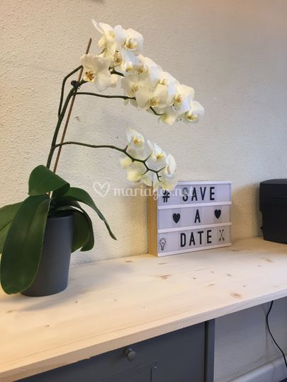 Save a date !