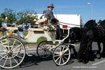 Cal�che tir�e par deux chevaux sur Attelage Dubois et ses Frisons