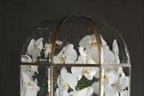 Orchidée et Térrarium