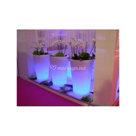 Pots lumineux et orchidées
