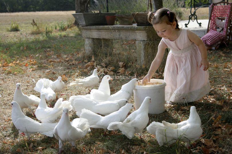 La fillette aux pigeons