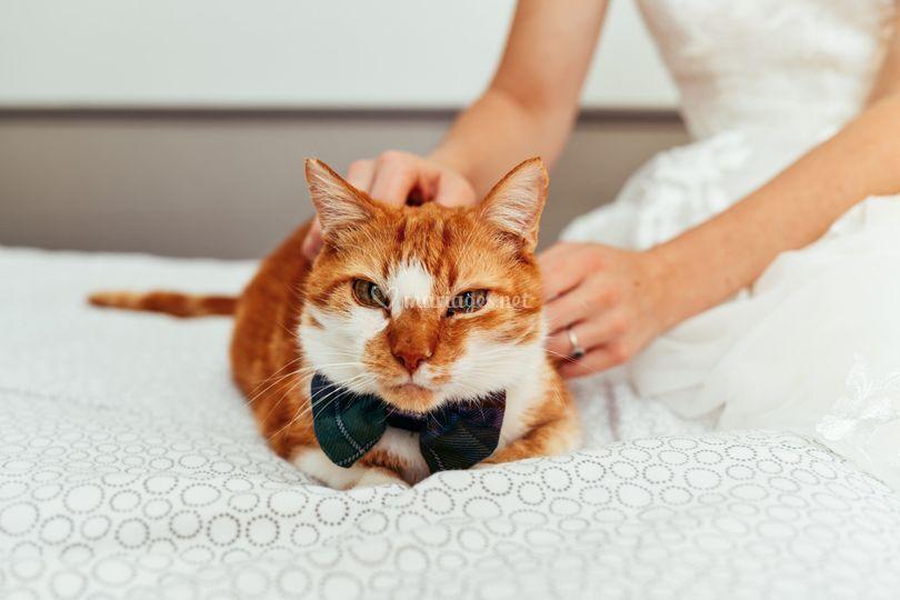 Le chat des mariés