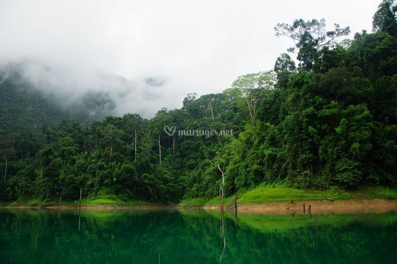 Nature Thaïlandaise