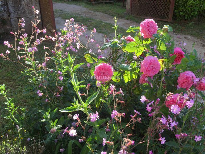 Losmonerie : jardin