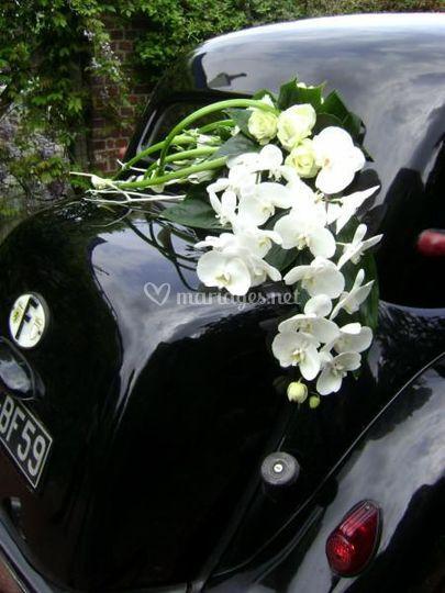 Composition arrière voiture