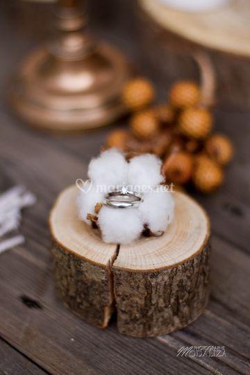 Alliances coton automne hiver