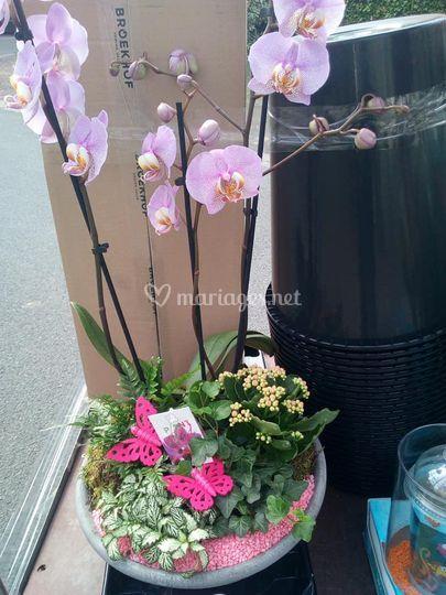 Compo orchidee