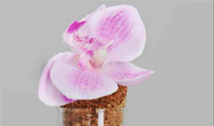 éprouvette et dragées, orchidé