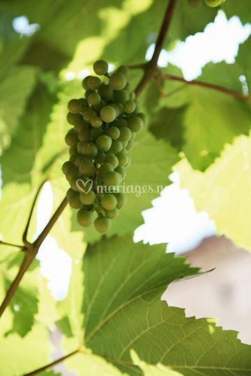 Vignes Quercynoises