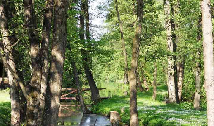 Notre jardin et ses étangs