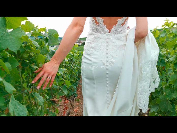 Extrait vignes
