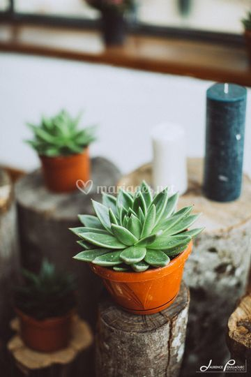 Cadeau invité - Succulente