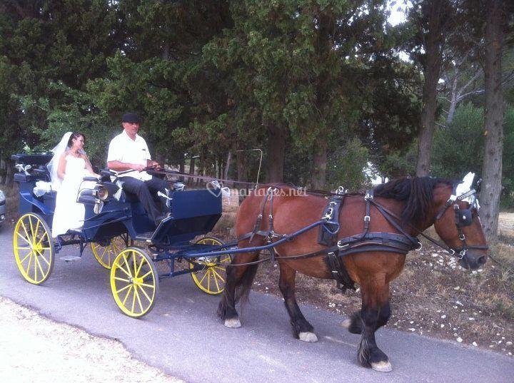 Mariage en calèche Vis à Vis
