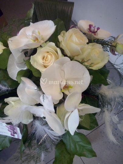 Orchidèe, rose, plume