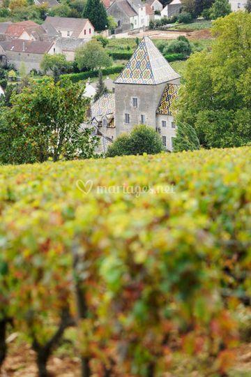 Les vignes autour du Château