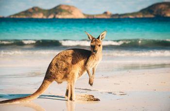 Lune de miel en Australie : la promesse d'expériences exceptionnelles !