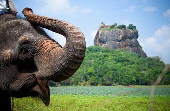 Lune de miel au Sri Lanka : prolongez votre passion dans ce pays au charme fou !