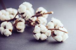 5 idées de cadeaux pour les noces de coton