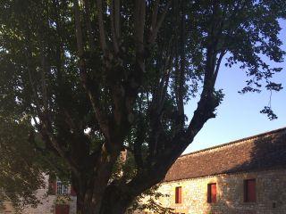 Château de Marsales 2