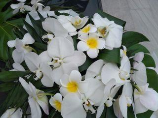 Kanis Fleur 5