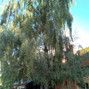 L'Orangerie de Vatimesnil 10