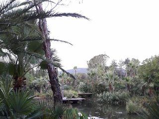 Tropicana Flore 2