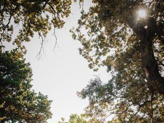 Les Cabanes Dans les Bois 3