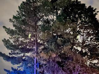 Firelight - Spectacle de feu et de led 3