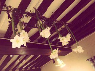 Histoire de Fleurs 5