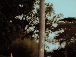 Orangerie de Préserville 2