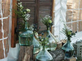 Fleurs d'Eucharis 2