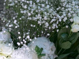 Fleurs d'Eucharis 5