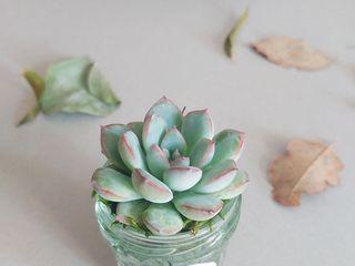 Les Contes Succulents 5